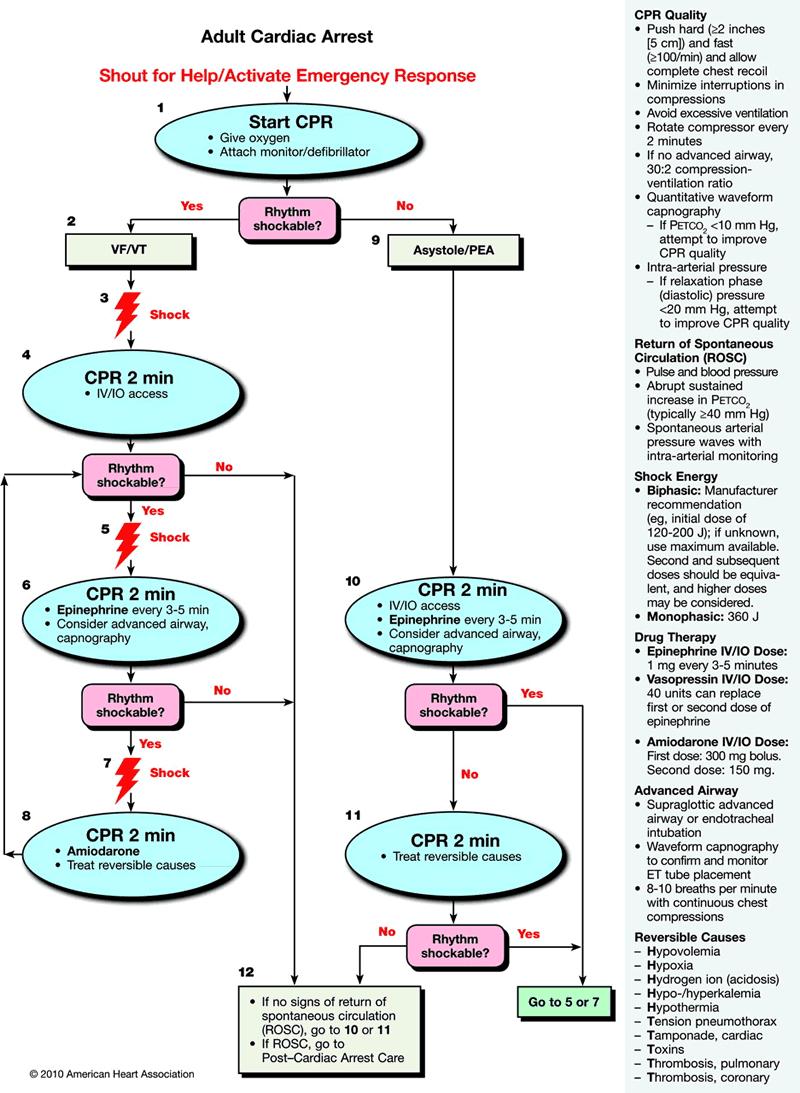 algorithm cardiac arrest aha resuscitation cardiopulmonary version card bls als