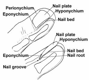 Trauma - Hand & Finger Injuries